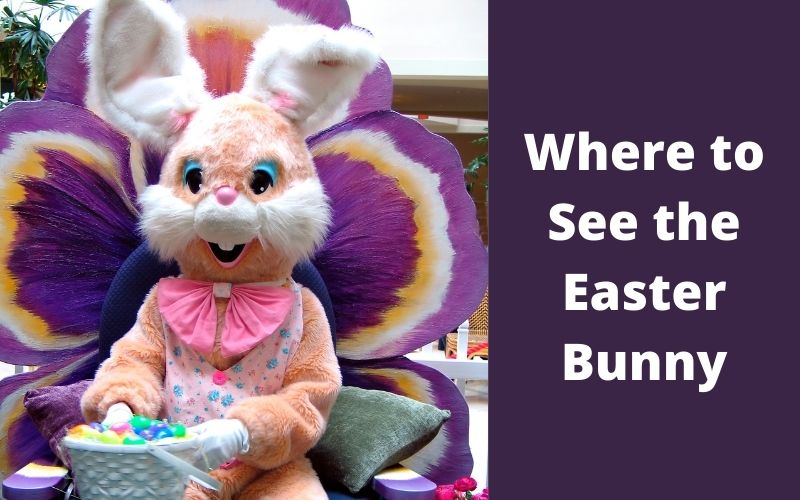 Where to See the Easter Bunny in Grey & Bruce County